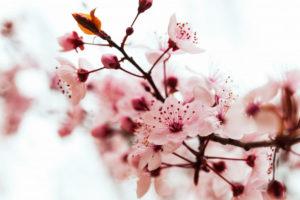 איך ריח יכול להשפיע על החלטות