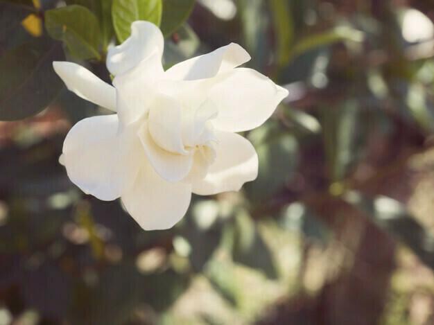 חושים וזיכרון: ככה הריח משפיע על מצב הרוח שלנו